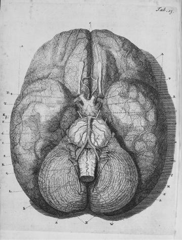 brain10